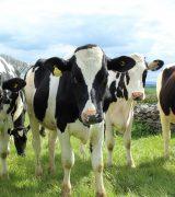 Lespakket De beste koeien: een boer met keuzestress