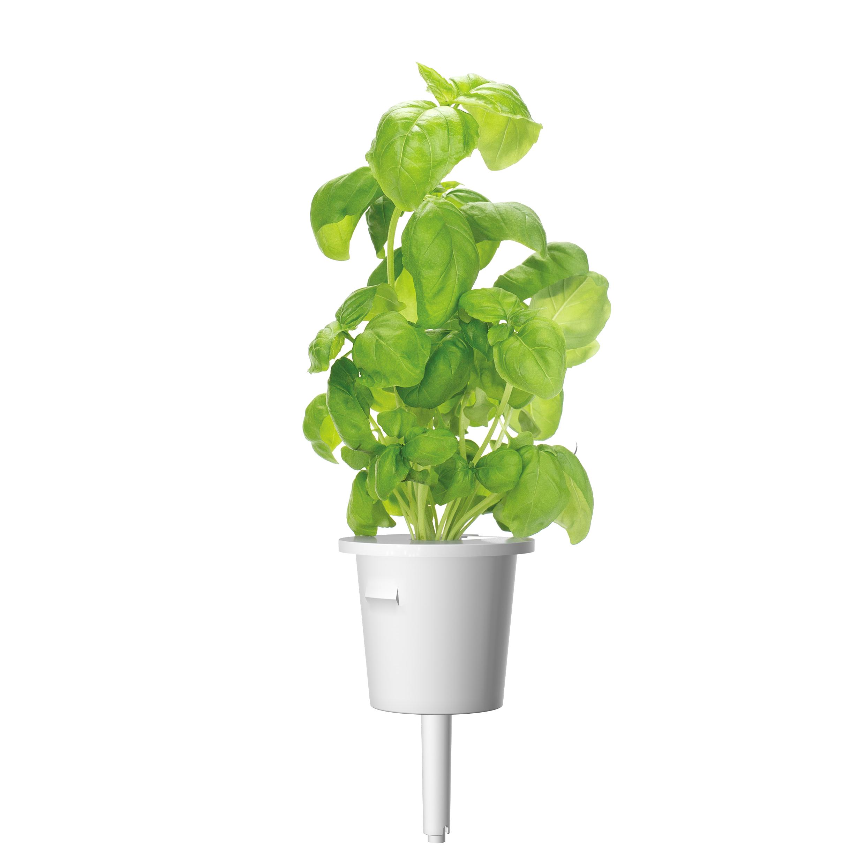 Click & Grow Basilicum 3-pack