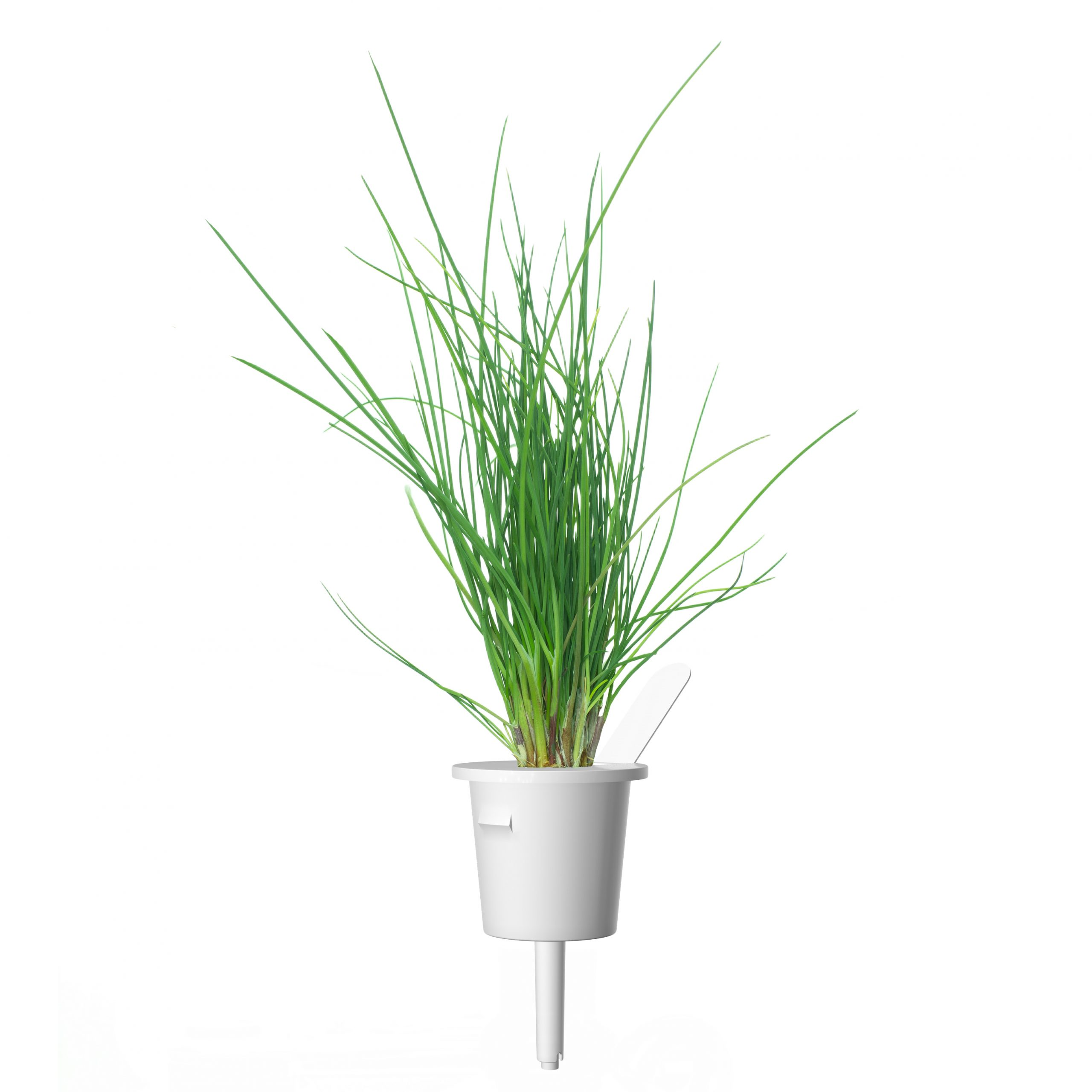 Click & Grow Bieslook Pods