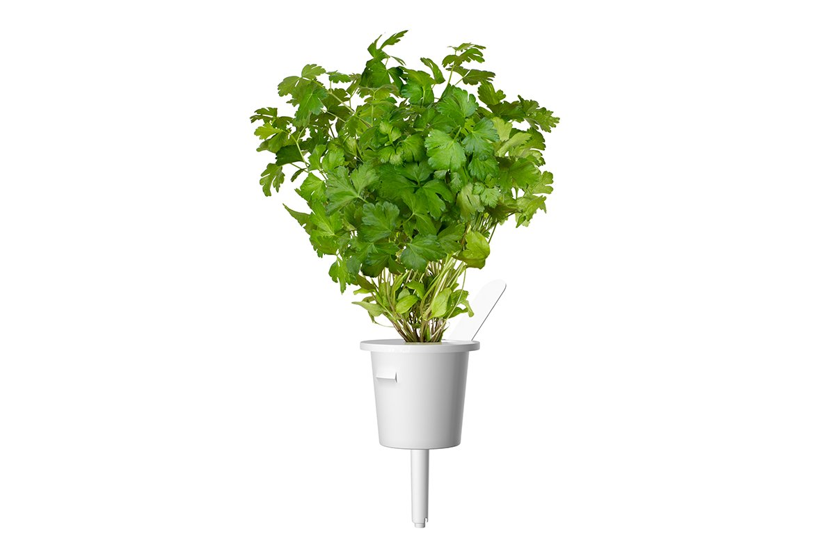 Click & Grow Peterselie Pods