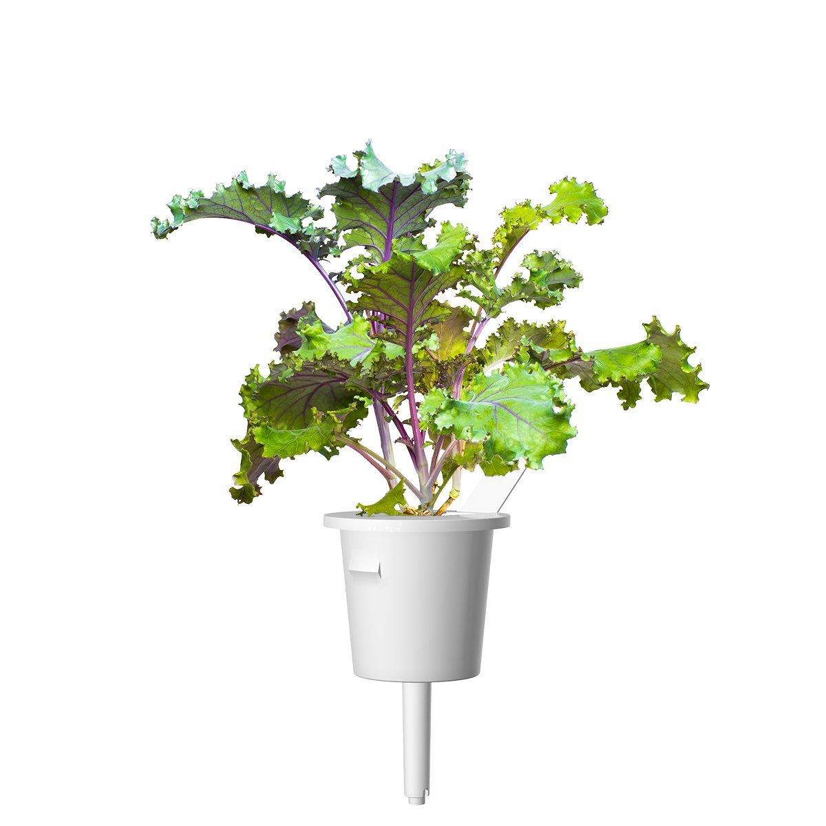 Click & Grow Rodekool Pods