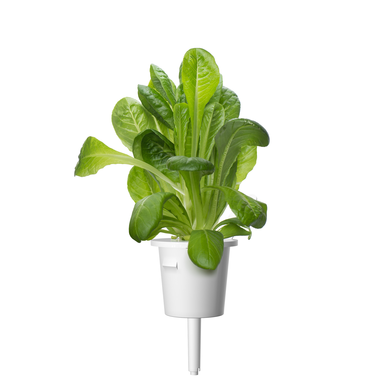 Click & Grow Bindsla Pods