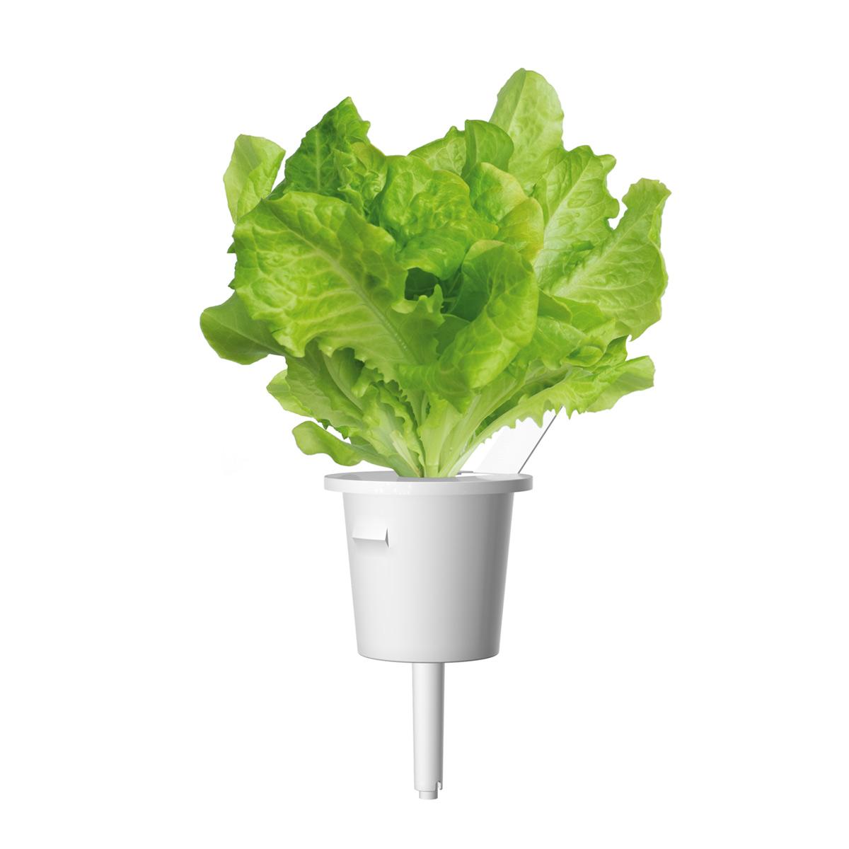 Click & Grow Groene Sla Pods