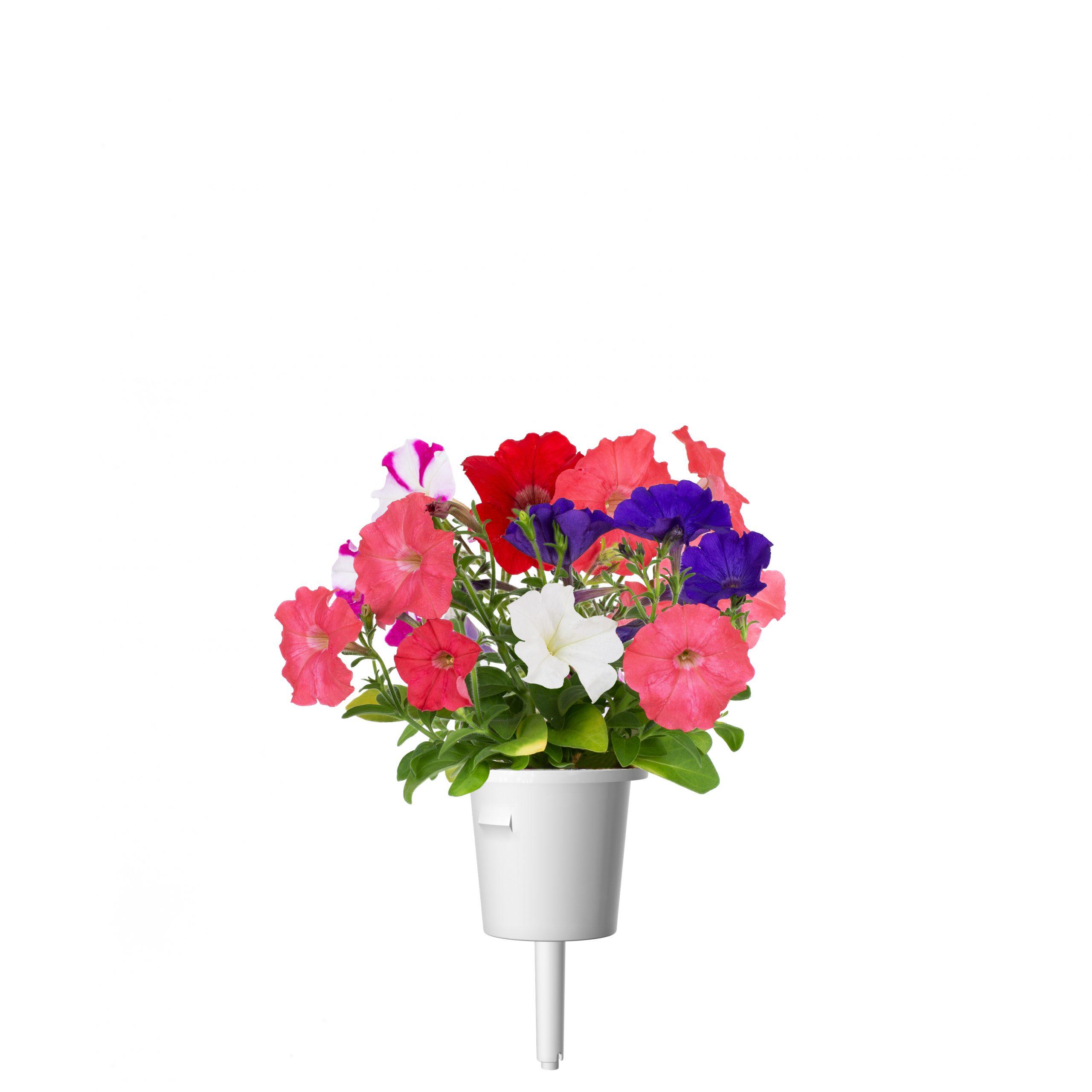 Click & Grow Petunia Pods